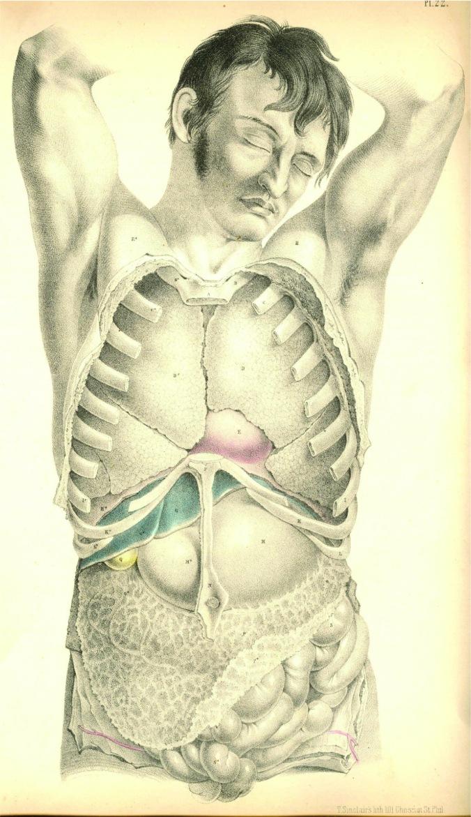 anatomyplate13a