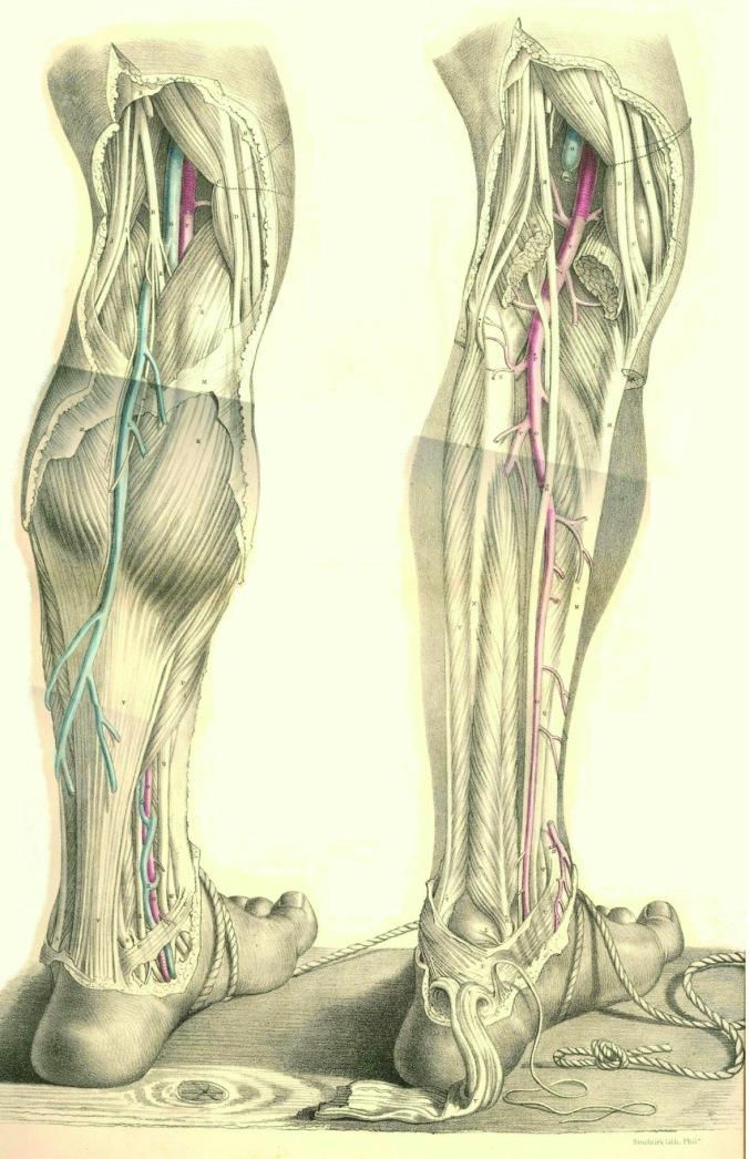 anatomyplate15a
