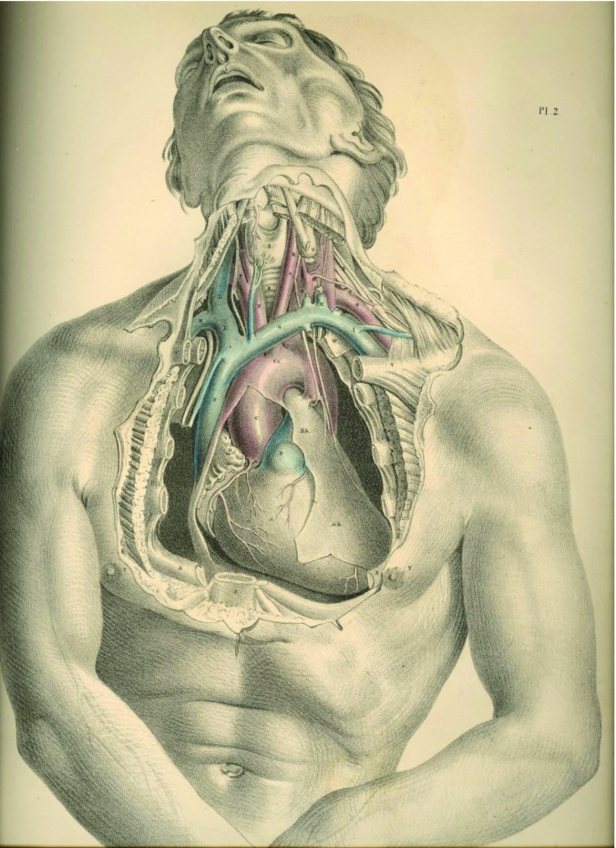 anatomyplate2a