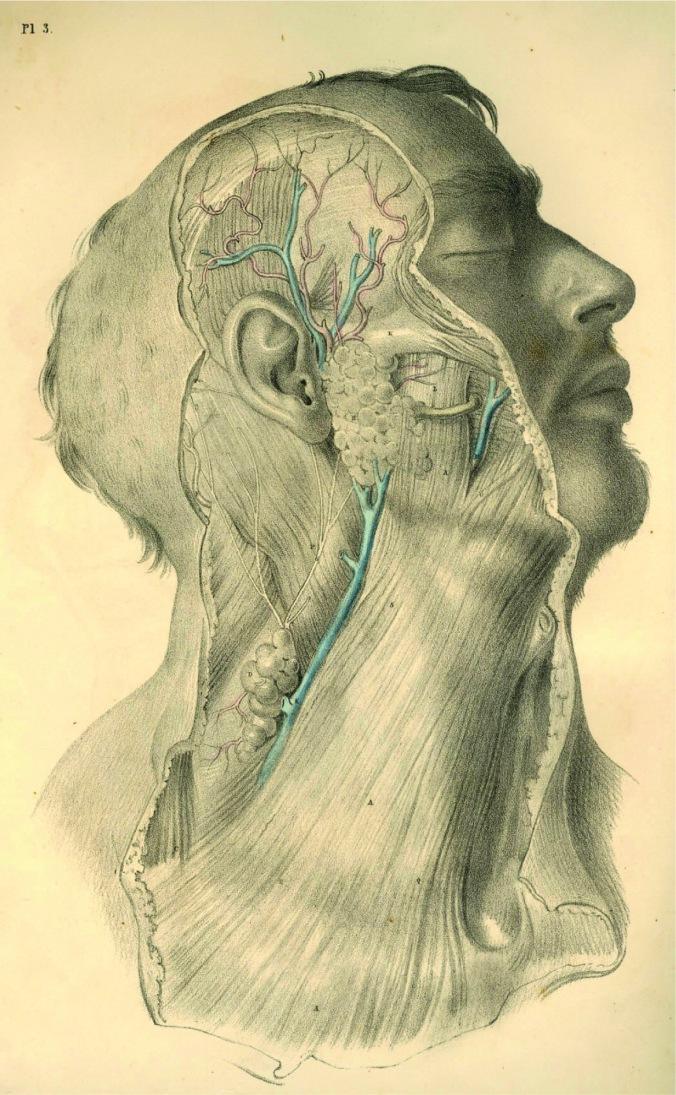 anatomyplate3a