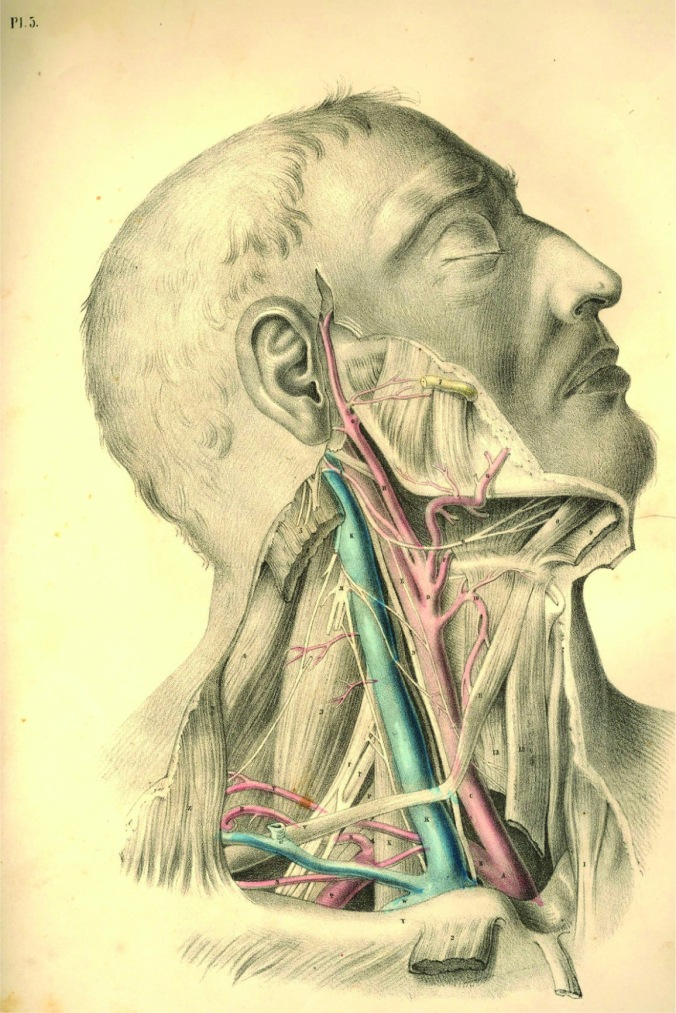 anatomyplate4a