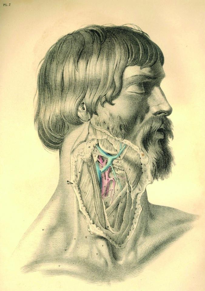anatomyplate5a
