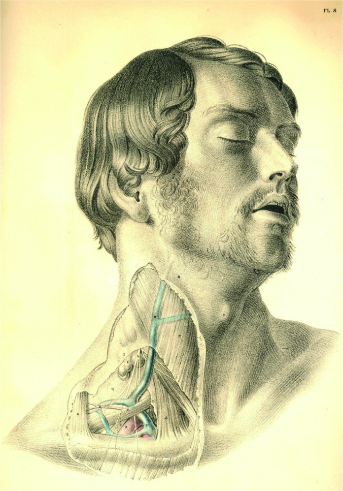 anatomyplate6a
