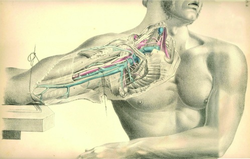 anatomyplate9a