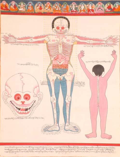 front_view_of_human_anatomy_tg51