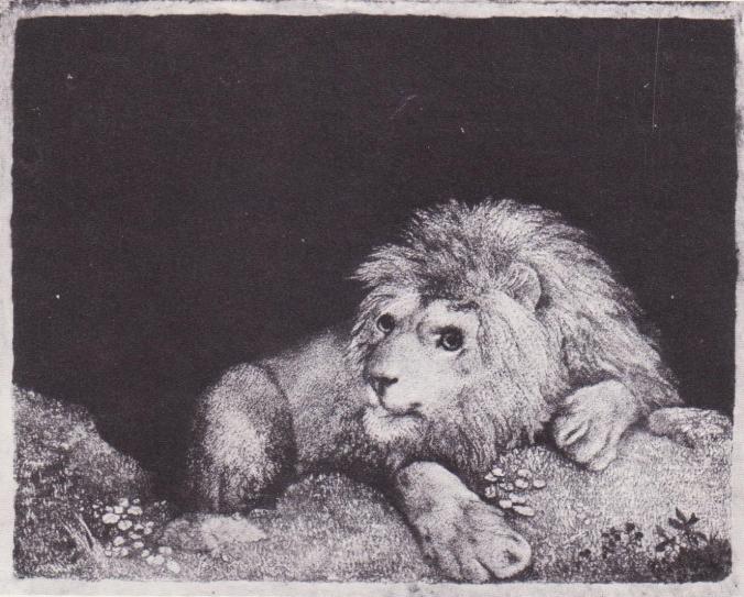 stubbs_lion03