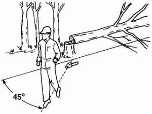 large-trees-300x225