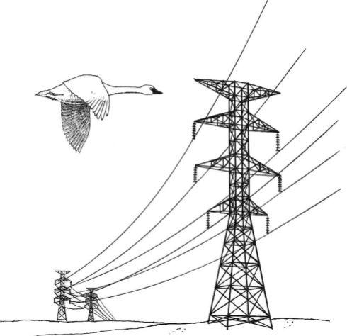 Power_lines_hazard_illustration